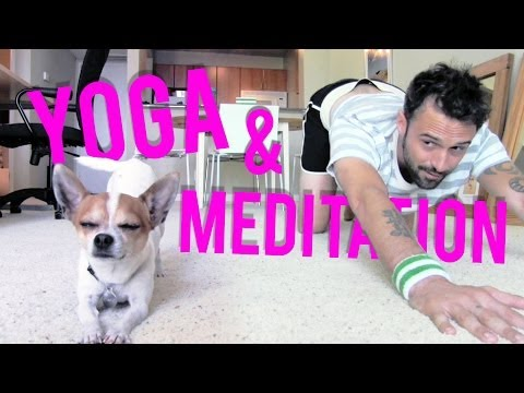 Yoga and meditation with a cute chihuahua