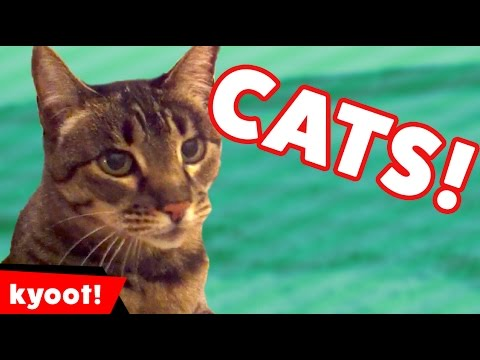 The Funniest Cute Cat & Kitten Home Video Bloopers of 2016 Weekly Compilation | Kyoot Animals
