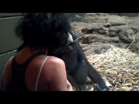 MONKEY GIBBON LINCOLN PARK ZOO LOVE ME SO MUCH ...2012 PART 3