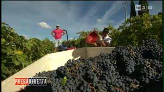 La fabbrica del vino - Presa Diretta 21/02/2016