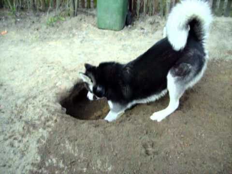 How Do I Get My Dog To Stop Digging Holes