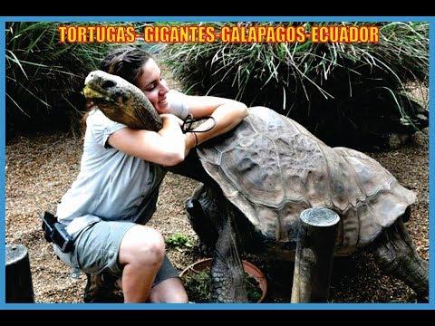Tortugas Gigantes-Historia-Islas Galápagos-Ecuador-Producciones