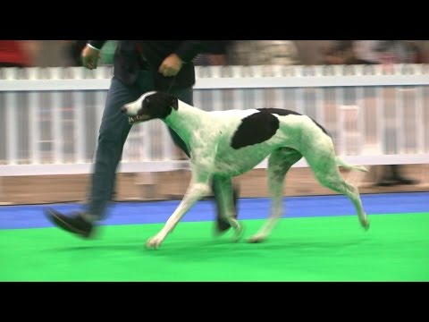 City of Birmingham Dog Show 2016 - Hound group - Shortlist