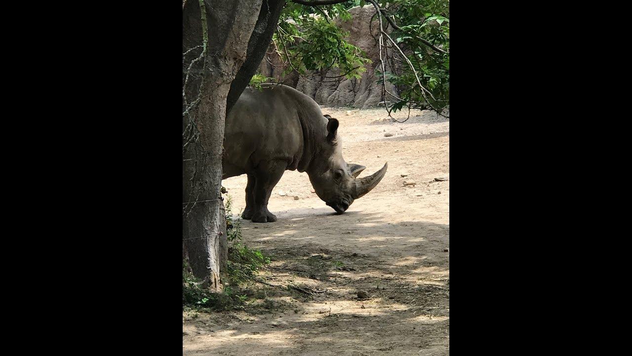 Animal Adventures with Jordan: White Rhino