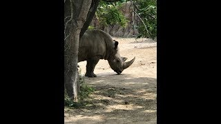 Animal Adventures with Jordan: White Rhino thumbnail