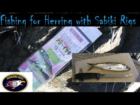 How To Fish For Herring With A Sabiki Rig