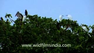 Migrating season attracts birds in Uttar Pradesh
