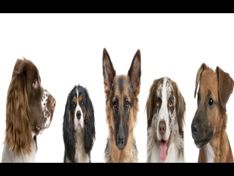 How To Find Out Which Dog Breed Is Right For You
