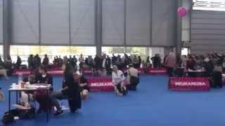 European Dog Show Brno 2014, Shih Tzu, Female, Junior Class