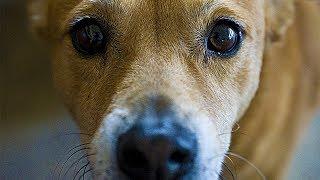 Что будет, если целовать собаку?