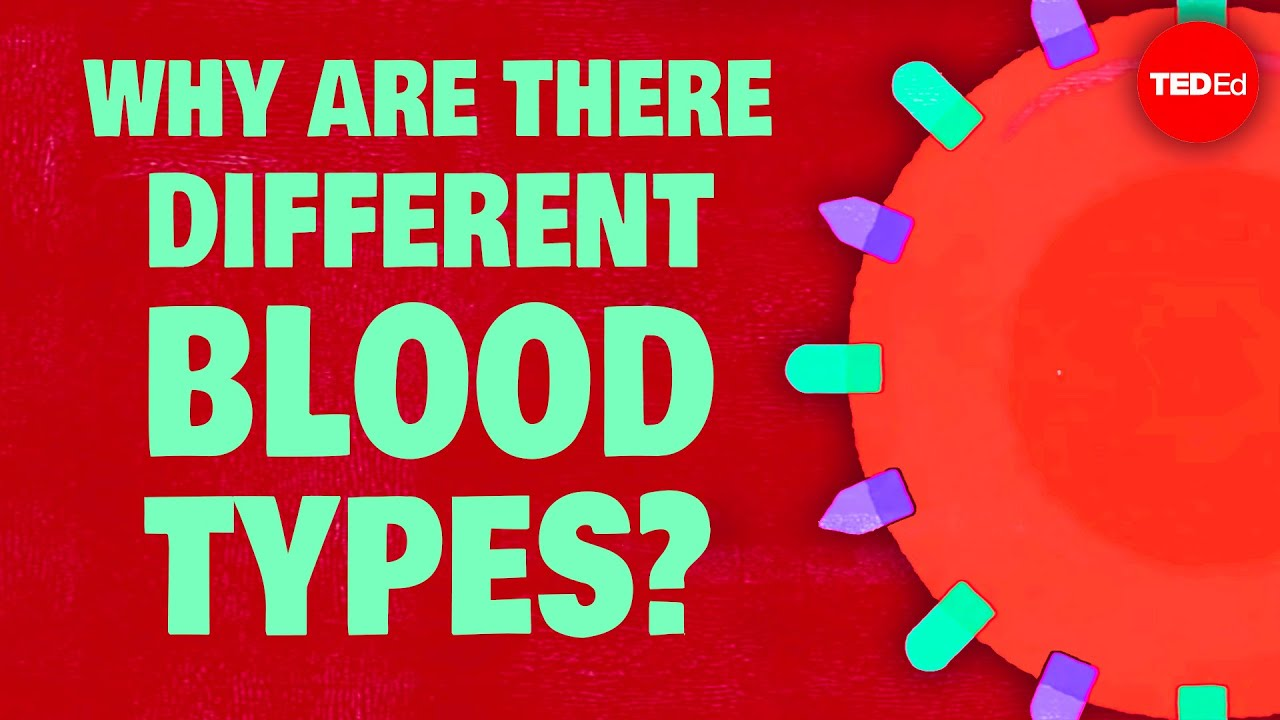 Why do blood types matter? - Natalie S  Hodge | TED-Ed