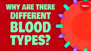 Repeat youtube video Why do blood types matter? - Natalie S. Hodge