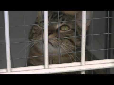 SPA Le Chat Et La Vie - 30 De Lutte Contre L'abandon