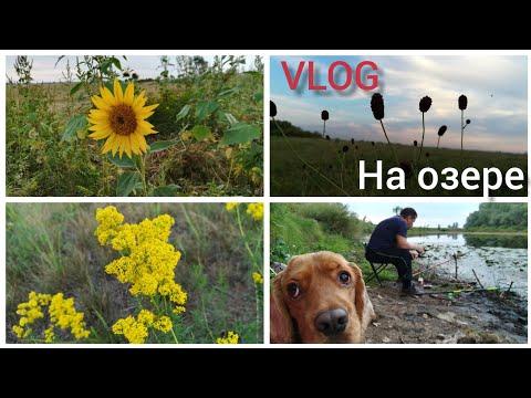 На озере VLOG: Полевые цветы Оренбург 18 августа 2019