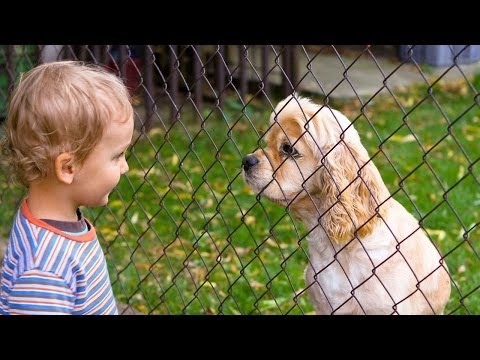 Dog Bites - Akron Children's Hospital video