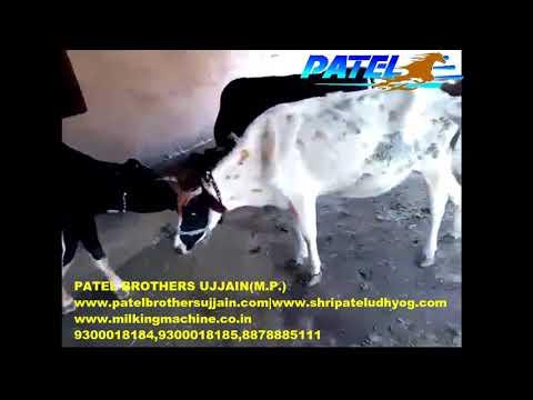 pulsater type milking machine AT LOW PRICE | PATEL BROTHERS