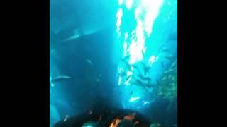 Аквариум в Дубаи Молле(Видео из тоннела аквариума в Дубаи Молле., 2012-12-15T09:11:57.000Z)