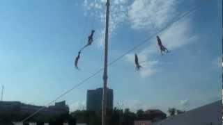 мексиканцы танцующие на столбе