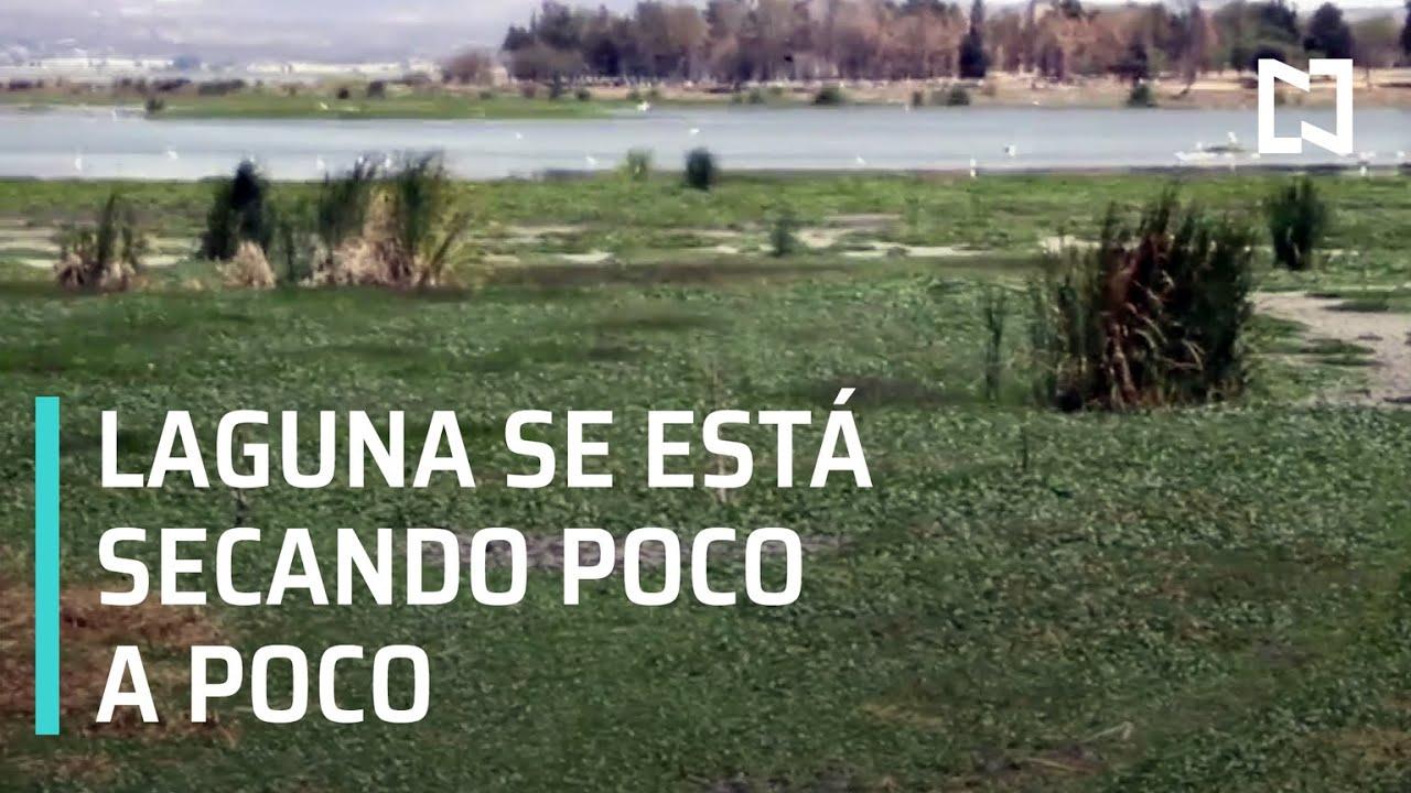 Download Laguna de Yuriria se está secado - Las Noticias