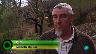 Sexto Brote Xylella Fastidiosa en Agrosfera