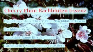 Cherry Plum Bachblüten Essenz