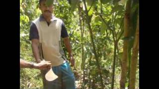 Journey to Arayuma Spice Farms - Part 1