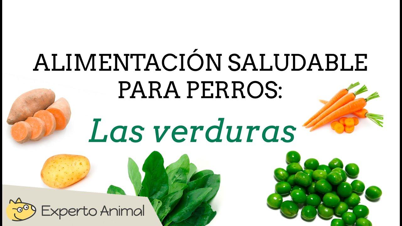 Alimentaci n saludable para perros las verduras youtube - Alimentos recomendados para perros ...