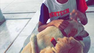 My dog 🐕 playing with his friend || must watch ||