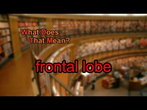What does frontal lobe mean?