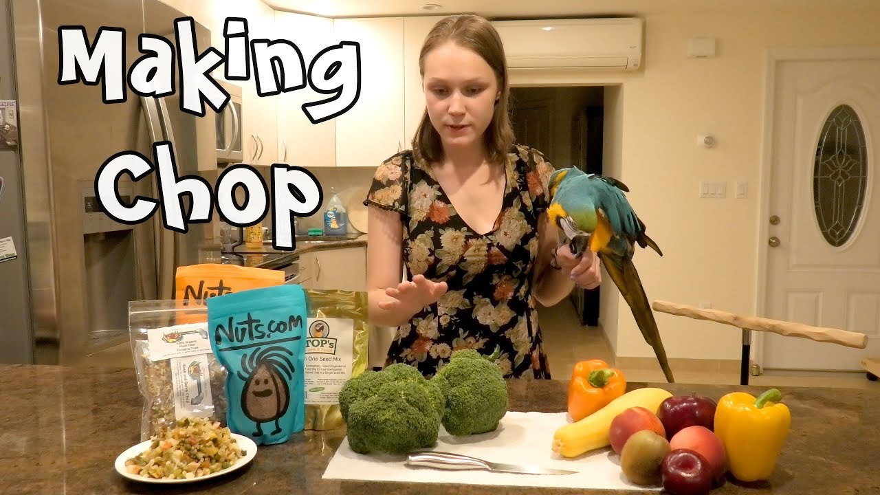 Image result for Blue And Gold Macaw feeding