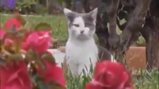 Короткие приколы про кошек