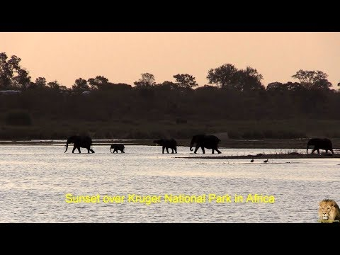 On Safari In Africa - Kruger National Park In December