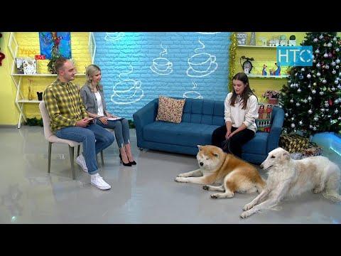 Японская порода собак акита-ину и русская псовая борзая: характер, питание / УтроLive / НТС