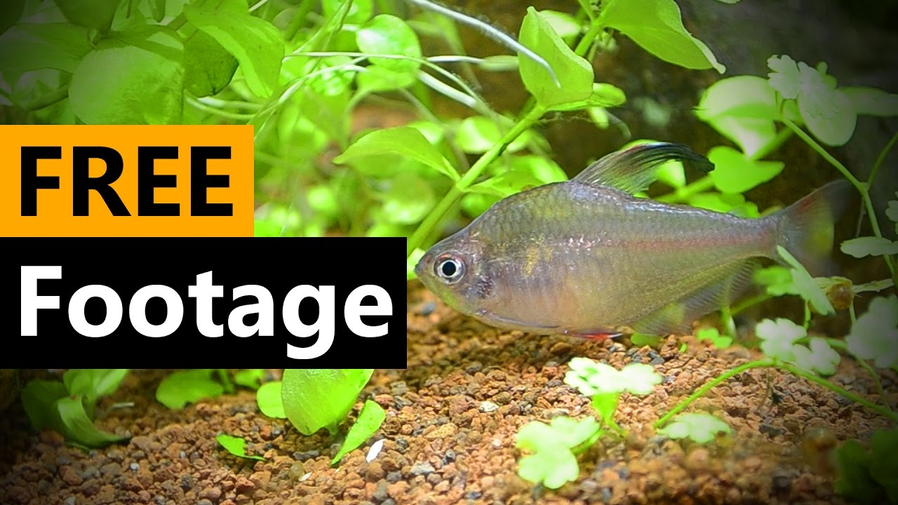 Fish Tank Footage - FREE Stock Video Footage [Download Full HD]