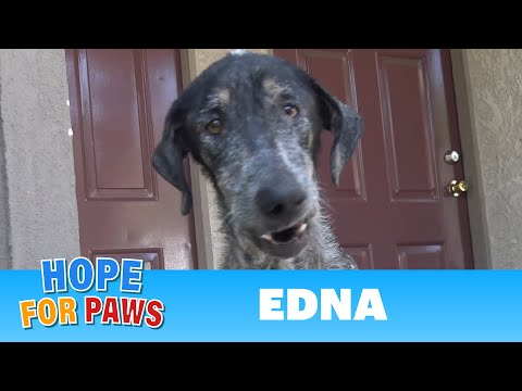 Edna's registered owner thought she was dead for 2 years!!!