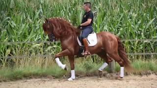 Красивая испанская лошадь - вот это красота!!!