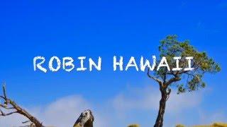 マウナケアロード 標高約4200mのマウナケアには一周できる道があるんです。 雲の中の神秘な世界 ハワイ島ならではの世界 呂敏 official Blog ...