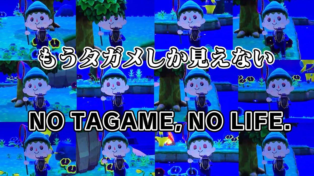【直撮り実況】夜のしげ森  NO TAGAME,NO LIFE