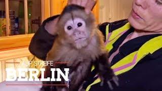 Affe in der Wohnung! Ist er von dem Stalker? | Auf Streife - Berlin | SAT.1 TV