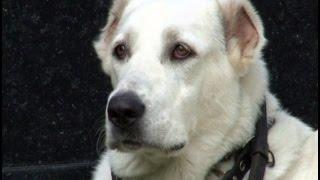 Пьяная женщина забыла в кафе свою собаку.MestoproTV
