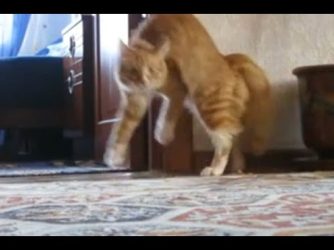 Cats on two legs compilation