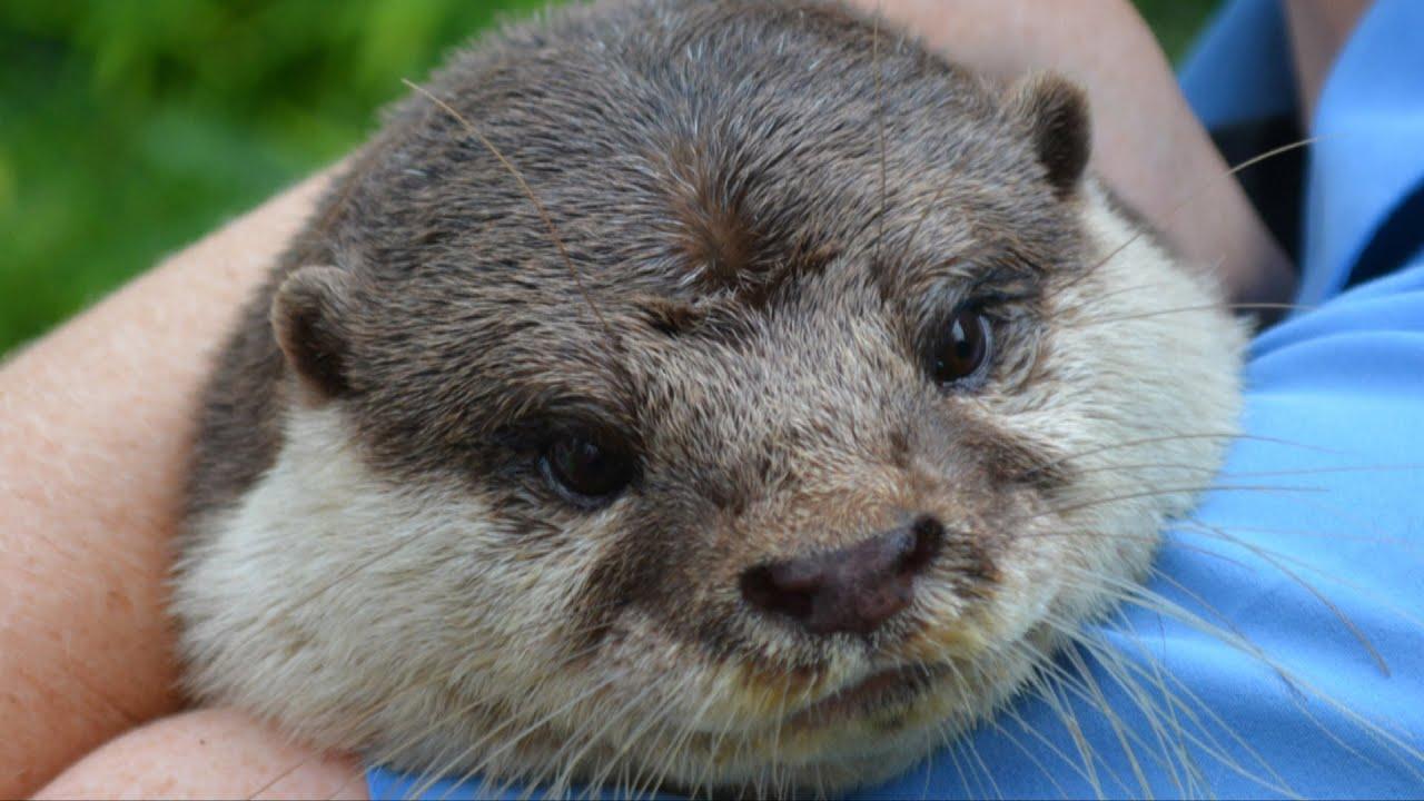 MouseSteps - SeaWorld Orlando Summer Offerings Include Shamu's ...