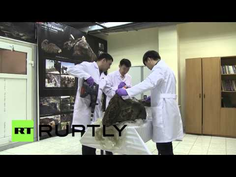 Russia: The woolly mammoth cloning project just got real!