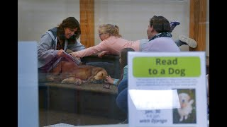 Kids read to Golden Retriever 'Django' in Read to a Dog Program