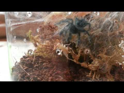 Spider Feeding 4
