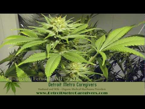MMMP: Organic Medical Marihuana ~ Detroit Metro Caregivers ~