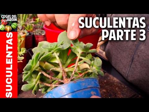 Cómo reproducir suculentas - Secretos del Experto - Parte 3