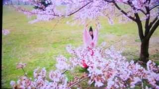 ドラマ「イケ麺そば屋探偵」(2009年) 堀内敬子.