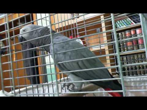Parrot speak Allah ka kalma