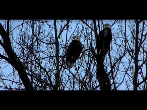 Susquehanna To Conowingo Dam And Back Biking Eagle Adventure!
